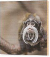 Tamarin Monkey 1 Wood Print