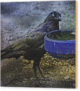Taming Of The Crow Wood Print