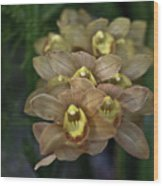Tan And Yellow Orchid Wood Print