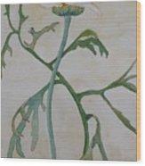 Tanacetum Wood Print