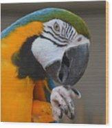 Tanganyika 0090 Wood Print