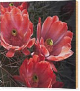 Tangerine Cactus Flower Wood Print