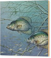 Tangled Cover Crappie II Wood Print