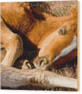 Tangled Foals Wood Print