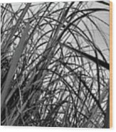 Tangled Grass Wood Print
