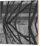 Tangled Reflections Wood Print