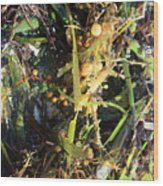 Tangled Seaweed Wood Print