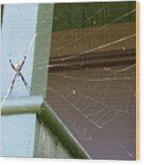 Tangled Web Wood Print