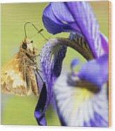 Tan_moth Wood Print