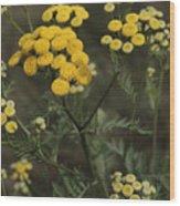 Tansy Blossoms Wood Print
