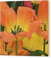 Tantalizing Tulips Wood Print