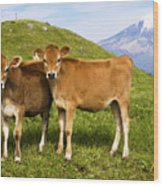 Taranaki, Dairy Cows Wood Print by Himani - Printscapes