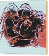 Tarbaby 4 Wood Print by Adam Kissel