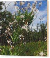 Tarflower Blooming Wood Print
