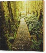 Tarkine Tasmania Trails Wood Print