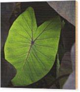 Taro Hoomaluhia 2 Wood Print