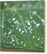 Taro Leaf Wood Print
