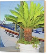 Tarpon                 Tarpon Palm                                     Wood Print