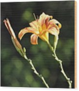 Tasmania Day Lily Wood Print