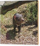 Tasmanian Devil 2 Wood Print