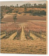Tasmanian Winery In Winter Wood Print