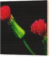 Tassel Flower Wood Print