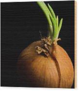 Tasty Onion Wood Print