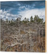 Tate's Hell State Forest Wood Print