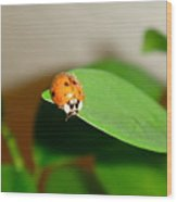 Tattered Ladybug Wood Print