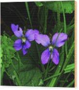 Tattered Wild Violets Wood Print