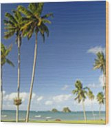 Taveuni Shoreline Wood Print