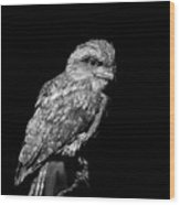 Tawny Frogmouth In Black And White Wood Print