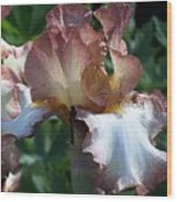 Tawny Iris Photograph Wood Print