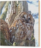 Tawny Owls Wood Print