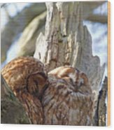 Tawny Owls In Love Wood Print