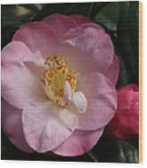 Taylor's Perfection Camellia Wood Print