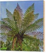 Te Puia Palm Tree Wood Print
