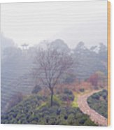 Tea Field Wood Print