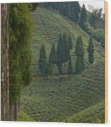 Tea Garden In Darjeeling Wood Print
