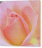 Tea Rose-elle  Wood Print