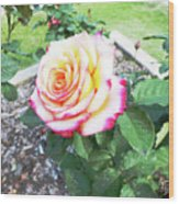 Tea Rose For A Lady Wood Print