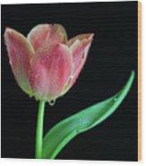 Teardrop Tulip Wood Print by Tracy Hall