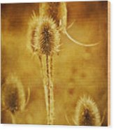 Teasel Group Wood Print