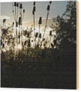 Teasel Sunset Glow Wood Print