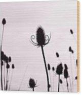 Teasels In A French Field  II Wood Print