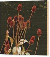 Teazels In A Secret Garden  Wood Print