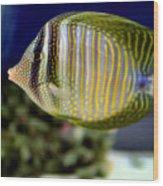Technicolor Fish Wood Print