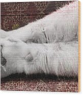 Teddy's Paw Wood Print