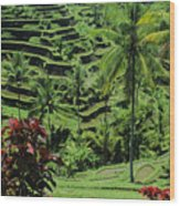 Tegalalang, Bali Wood Print