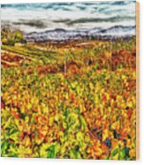 Temecula Vineyard Wood Print